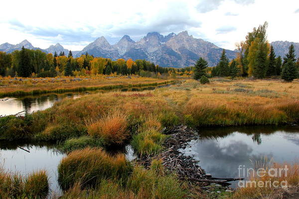 Photograph - Grand Tetons by Cynthia Mask