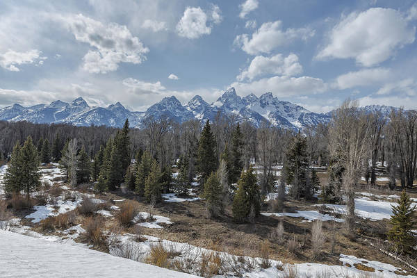 Photograph - Grand Tetons From Schwabacher Road by Belinda Greb