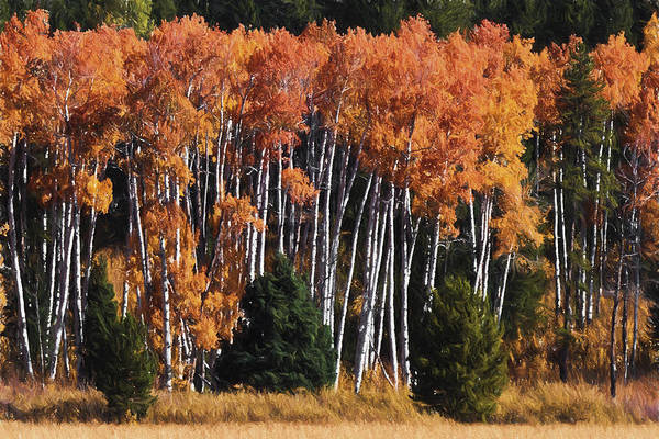 Photograph - Grand Tetons In Fall Colors  by Wes and Dotty Weber