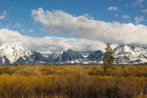 Photograph - Grand Tetons by Mike Evangelist