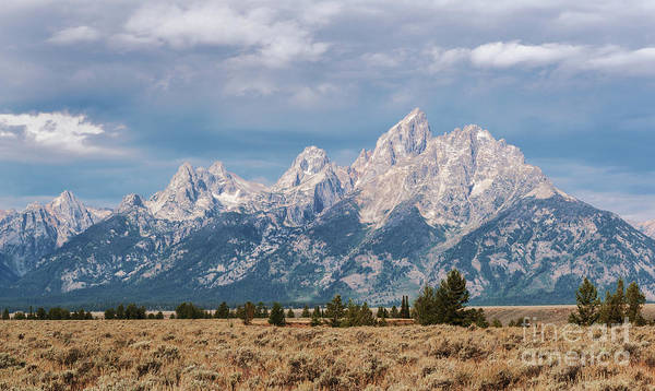 Photograph - Grand Tetons by Sharon Seaward