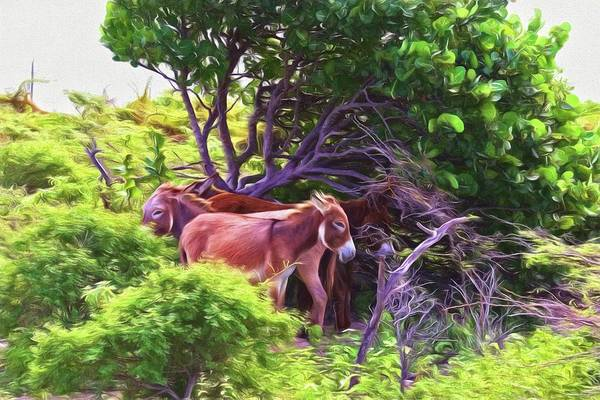 Photograph - Grand Turk Donkeys In The Shade by Alice Gipson