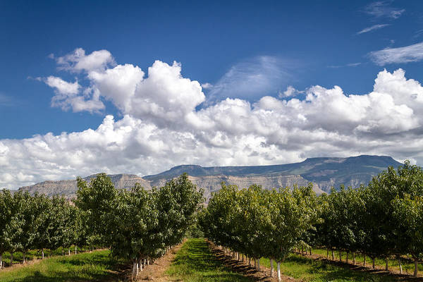 Grand Valley Orchards Art Print