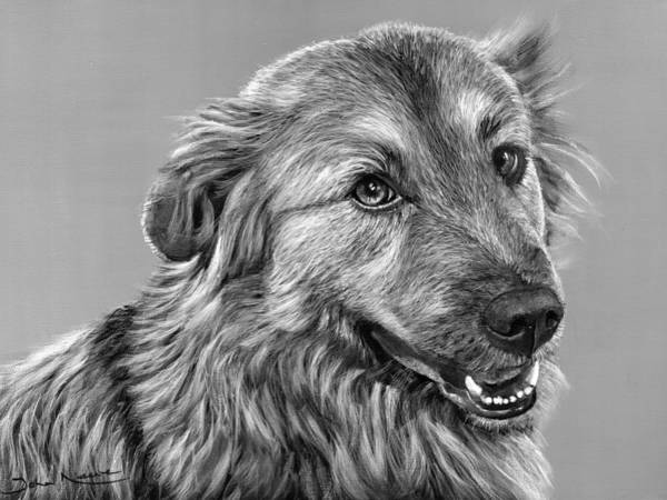 Painting - Granddog Kuper by John Neeve