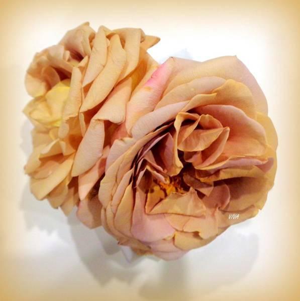 Photograph - Grandmas Roses - 4 by VIVA Anderson