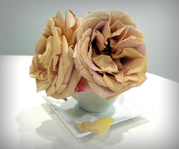 Photograph - Grandmas Roses - 5 by VIVA Anderson