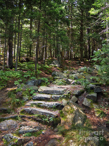 Photograph - Granite Steps, Camden Hills State Park, Camden, Maine -43933 by John Bald