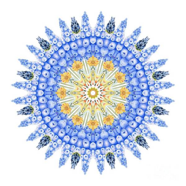 Wall Art - Digital Art - Grape Hyacinth Mandala by Mary Machare