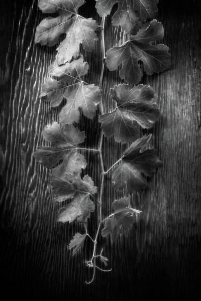 Wall Art - Photograph - Grape Leaves On Wood In Bw by YoPedro