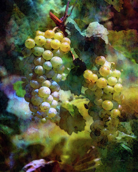 Photograph - Grape Prism 2739 Idp_2 by Steven Ward