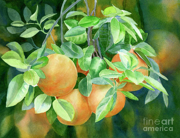 Citrus Painting - Grapefruit With Background by Sharon Freeman