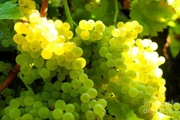Photograph - Grapes by Angela Rath
