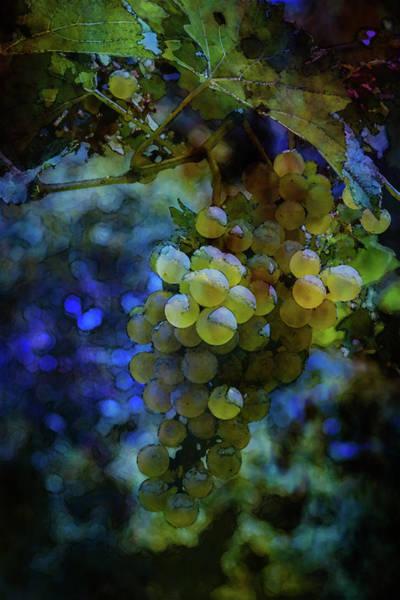 Photograph - Grapes At River Ridge Winery Digital Watercolor 2665 W_2 by Steven Ward