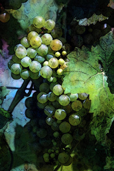 Photograph - Grapes Digital Painting 2676 Dp_2 by Steven Ward