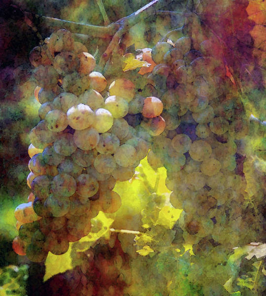 Photograph - Grapes In The Bright Mid-day Sun 2698 Idp_2 by Steven Ward