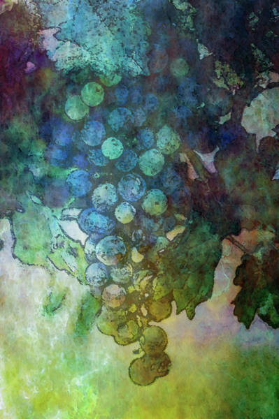 Photograph - Grapes On The Vine 2747 Dp_2 by Steven Ward
