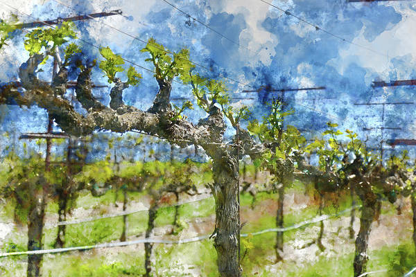 Photograph - Grapevines In The Spring by Brandon Bourdages
