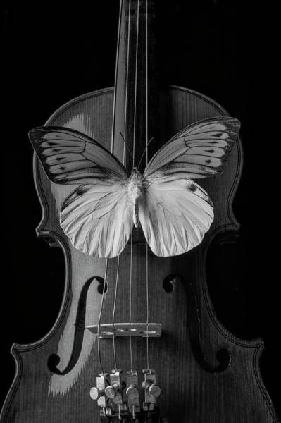 Photograph - Graphic Butterfly On Violin by Garry Gay