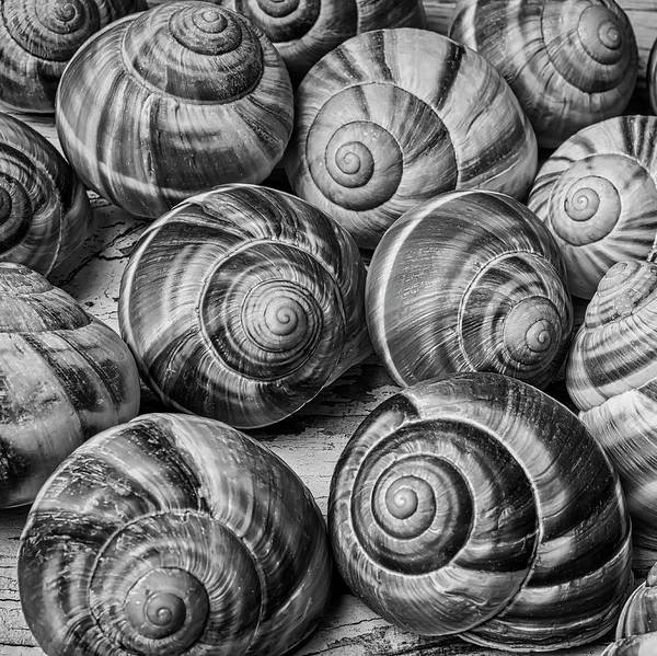 Wall Art - Photograph - Graphic Snail Shells In Black And White by Garry Gay