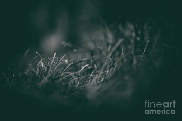 Photograph - Grass by Clayton Bastiani