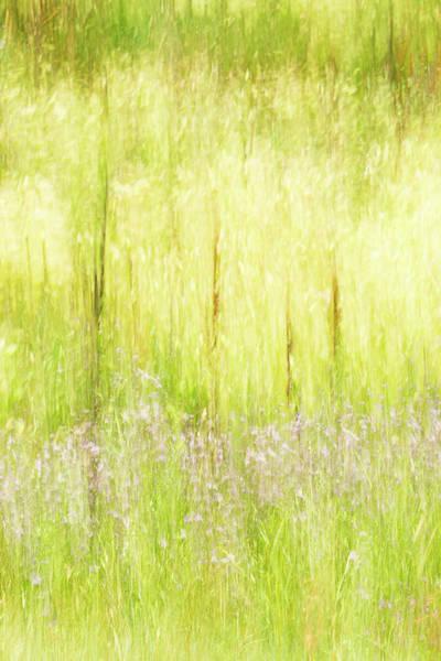 Photograph - Grass Dance by Deborah Hughes