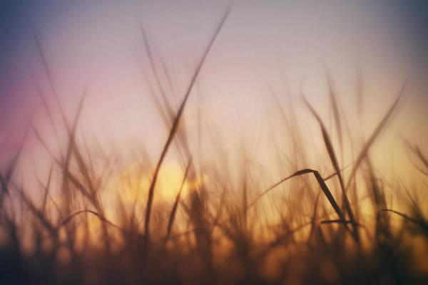 Photograph - Grass In A Windy Field by Fabrizio Troiani