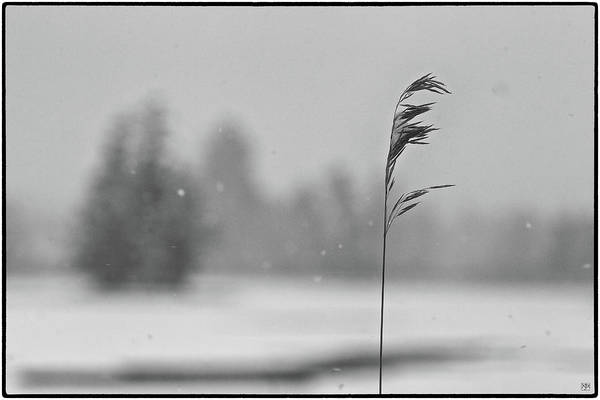 Photograph - Grass In The Winter by John Meader