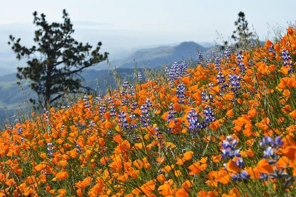 Figueroa Mountain Photograph - Grass Mountain Wildflowers by Kyle Hanson