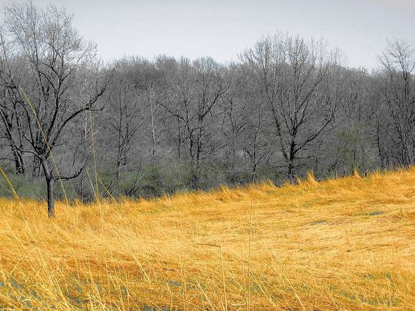 Photograph - Grass Of Fire by Dylan Punke