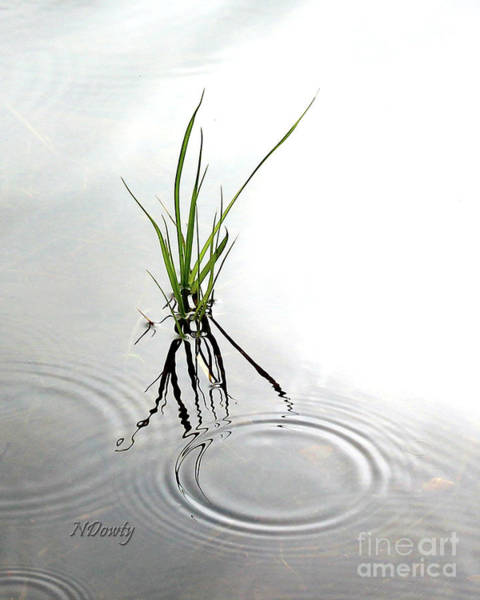 Photograph - Ripples And Reflections by Natalie Dowty