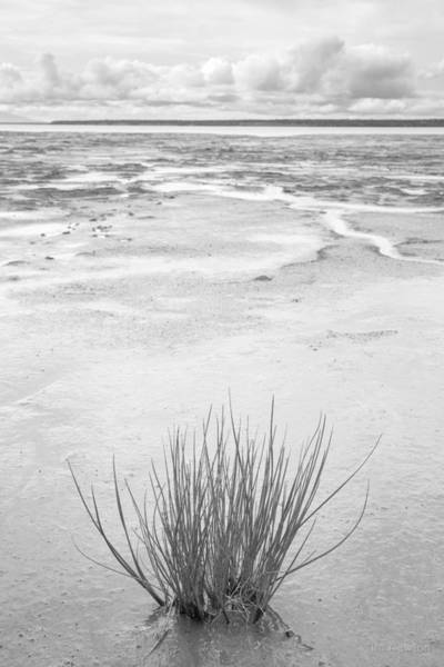 Photograph - Grass Tuft In Glacial Silt by Tim Newton