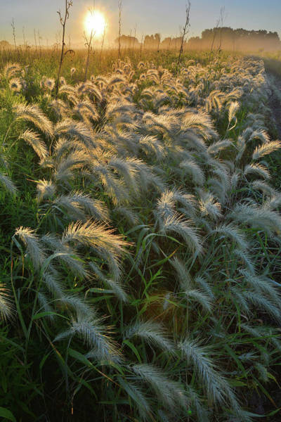 Photograph - Grasses Aglow In Glacial Park by Ray Mathis