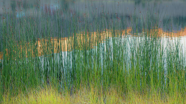 June Lake Photograph - Grasses And Reflections by Joseph Smith