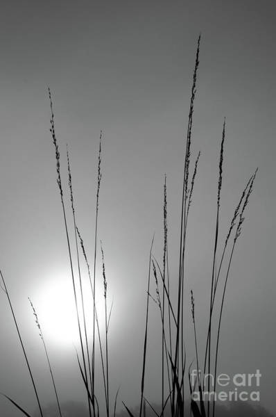 Photograph - Grasses At Sunrise by Charles Owens