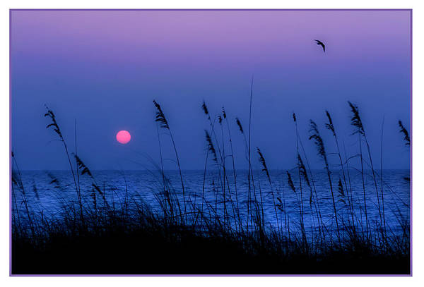 Wall Art - Photograph - Grasses Frame The Setting Sun In Florida by Mal Bray