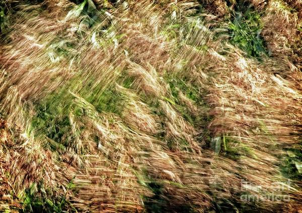 Photograph - Grasses In The Breeze by Martyn Arnold