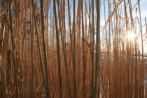 Photograph - Grasses by Laura Kinker