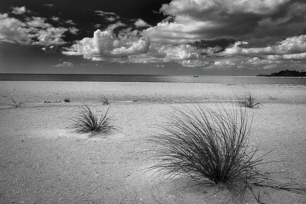 Photograph - Grasses On The Beach by Rick Strobaugh