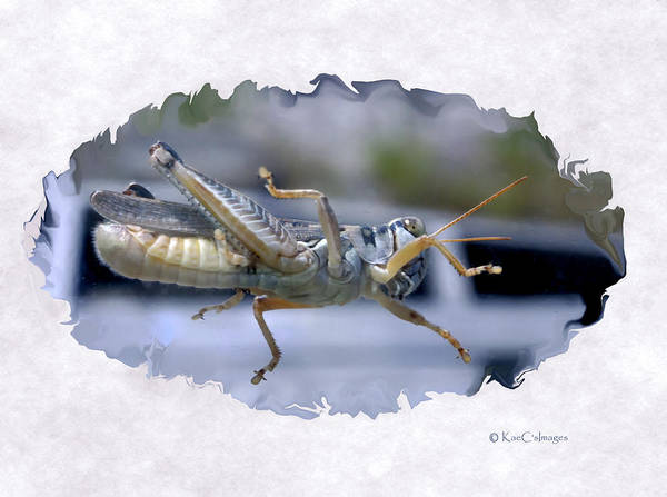 Border Mixed Media - Grasshopper From Below by Kae Cheatham