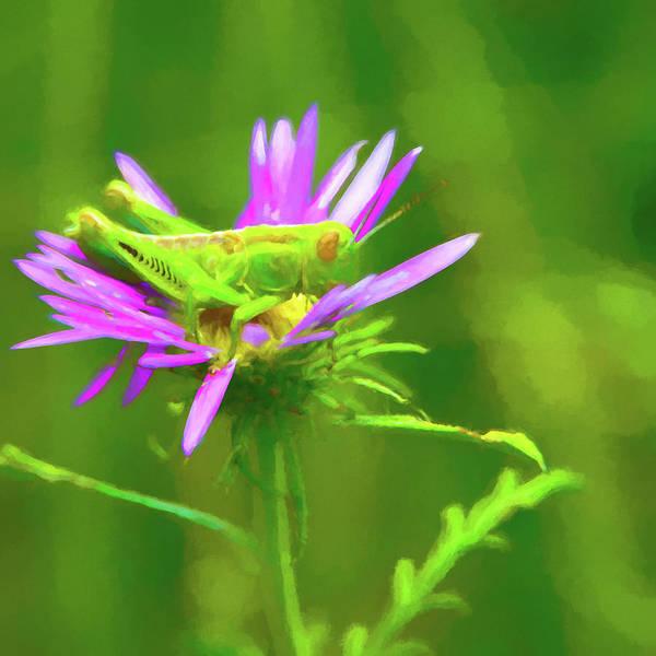 Amarillo Digital Art - Grasshopper In A Flower 2 by Adam Reinhart