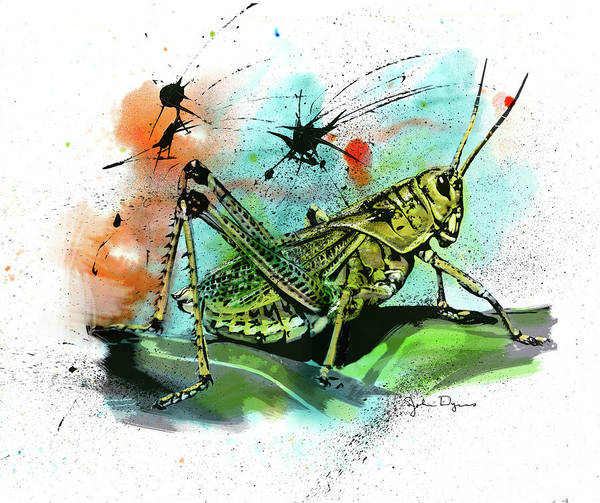 Drawing - Grasshopper by John Dyess