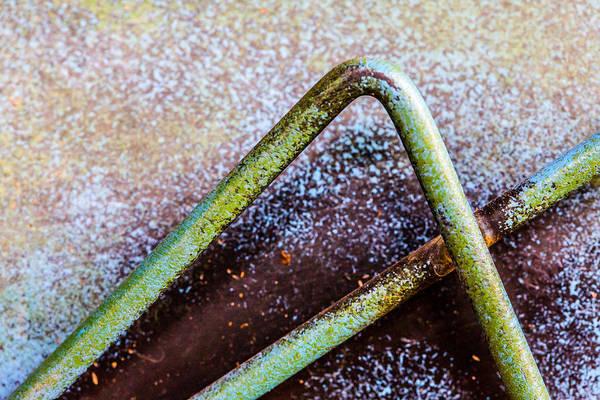 Photograph - Grasshopper Legs by SR Green