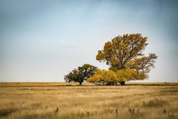 Photograph - Grassland Trees In Autumn by Mary Lee Dereske