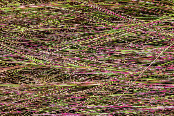 Photograph - Grassy Abstract #2 by Patti Deters