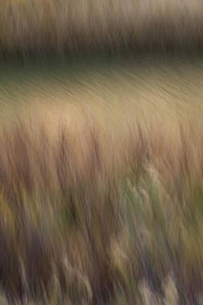 Photograph - Grassy Bank by Deborah Hughes