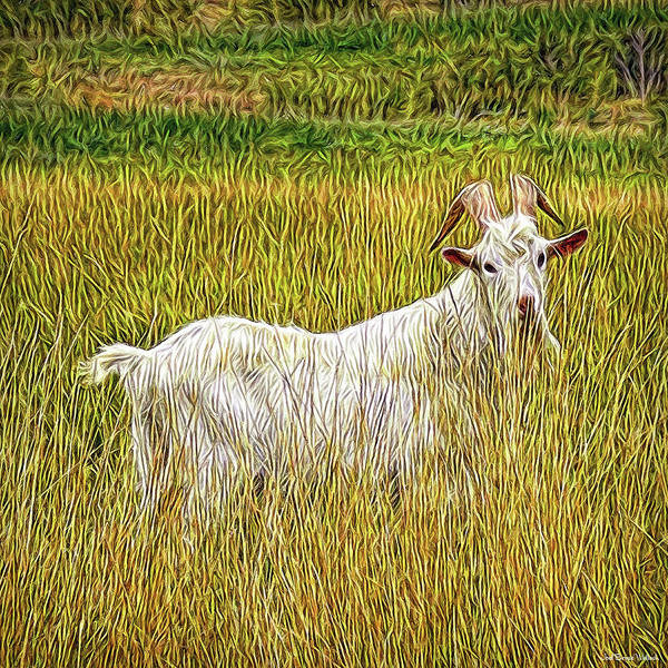 Digital Art - Grassy Goat by Joel Bruce Wallach
