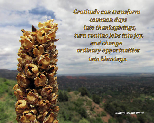 Digital Art - Gratitude Can Transform Days by Julia L Wright