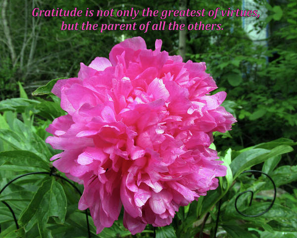 Digital Art - Gratitude Is The Parent Of All Virtues by Julia L Wright