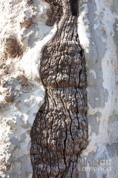 Photograph - Gray Bark Abstract by Carol Groenen