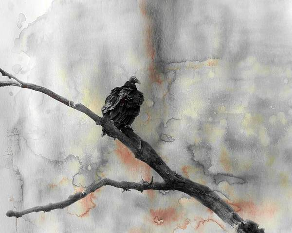 Turkish Mixed Media - Gray Day Vulture by Gothicrow Images